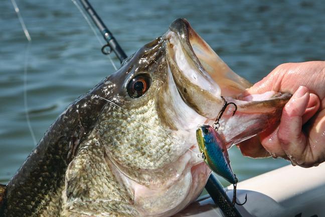 春のバス釣り、定番の戦略6選