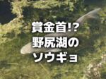 賞金首!?野尻湖のソウギョ