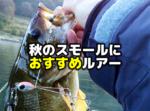 秋のスモールマウスバスにおすすめ!釣れるルアーのご紹介【全国通販】
