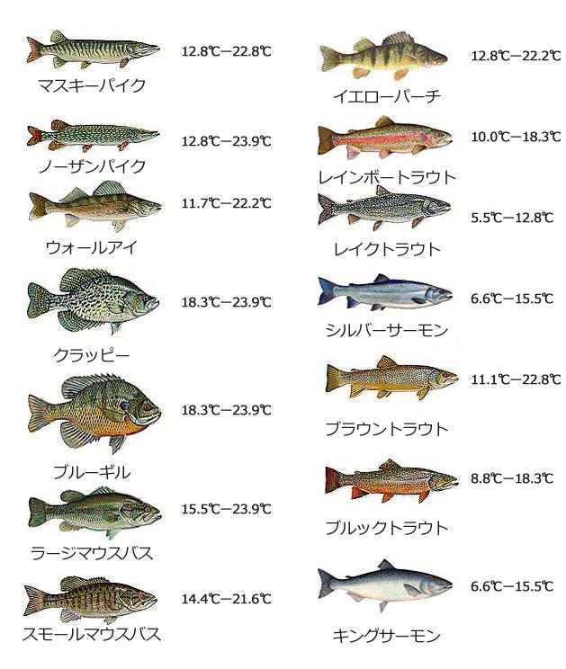 水温と酸素が釣りに与える影響…