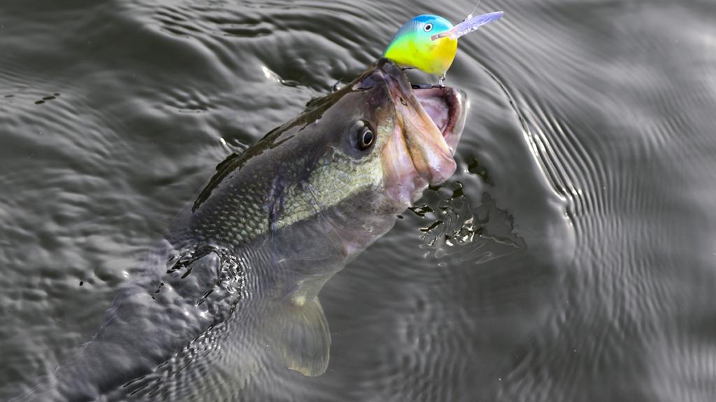 この夏、セカンダリーポイントを釣る方法と理由