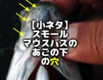 【小ネタ】スモールマウスバスの耳