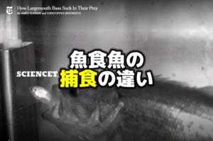 魚食魚の捕食の違い