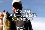 ビッグスモールマウスを釣る5つのヒント