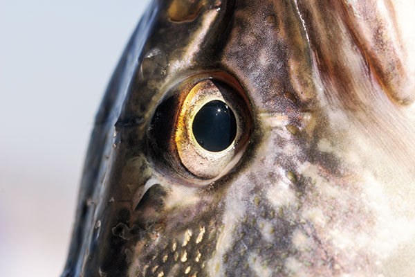 魚の目は、どう見えているのか