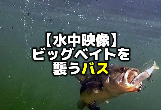 【水中映像】ビッグベイトを襲うバス