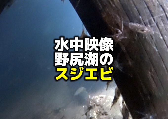 水中映像:野尻湖のスジエビ