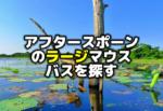 アフタースポーンのラージマウスバスを釣る