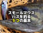 スモールマウスバスを釣る5つの基本