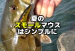 夏のスモールマウスバス釣りはシンプルに