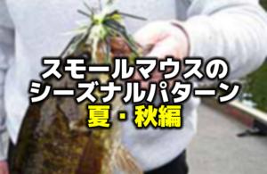 スモールマウスバス釣りのシーズナルパターン:夏・秋編