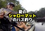 夏のシャローマットのバス釣り