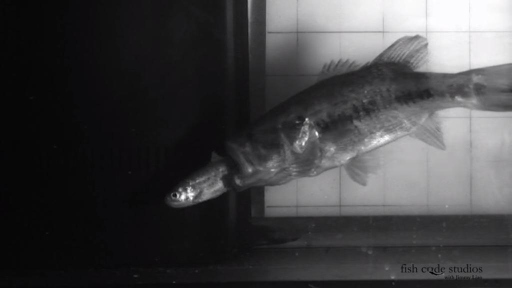 スイムベイトを科学する:バスは魚の足跡を追う!?