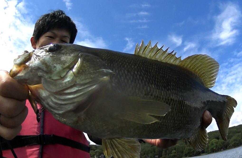 秋の野尻湖:大減水のスモールマウスバス釣り 2018.9.11