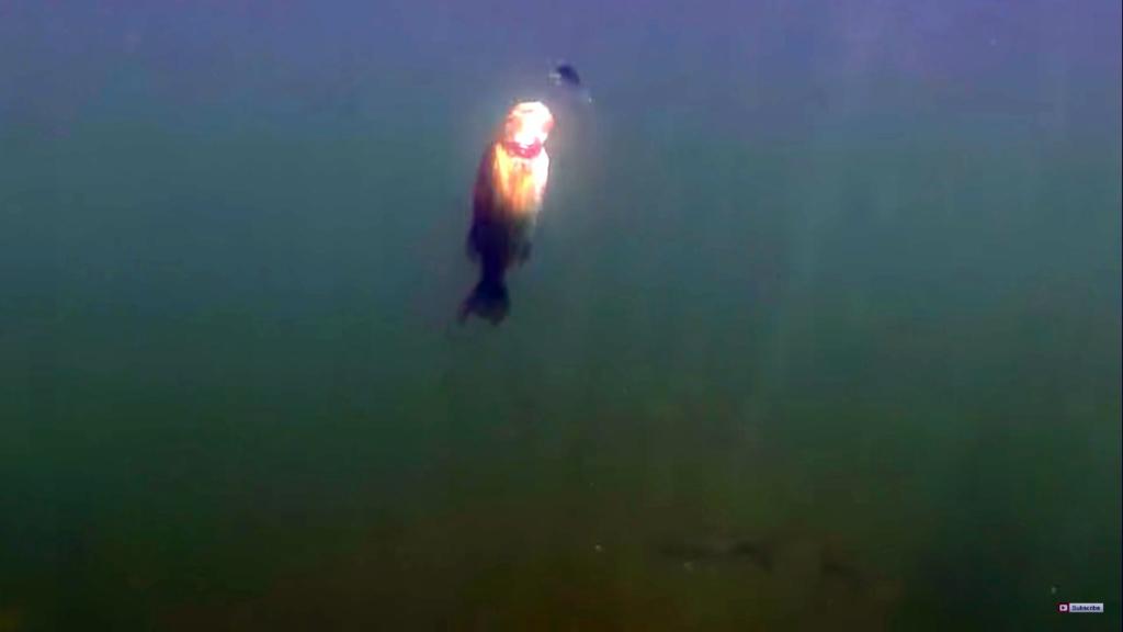 水中映像・冬のビッグベイト&ジャークベイトの注意点