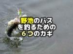 野池のバス釣りのための6つのカギ