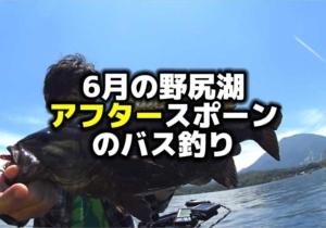6月の野尻湖スモールマウスバス釣り:ステルスペッパー&ゲーリータイニーイカ