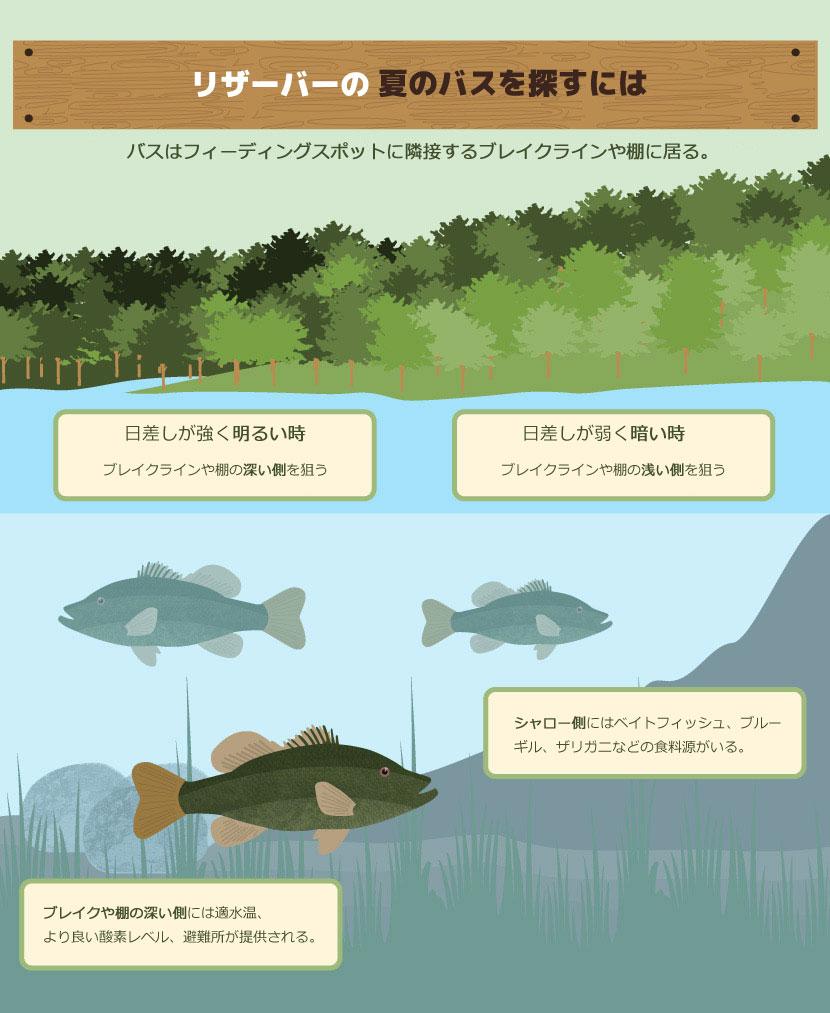 夏のバスを釣る方法:リザーバー&ナチュラルレイク