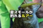夏のスモールマウスバスが釣れるルアー・ワーム