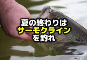 夏の終わりのバス釣りは「サーモクライン」を釣れ