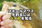 スモールマウスバスを釣るにはベイトを知ること