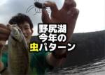 野尻湖の今年の虫パターン