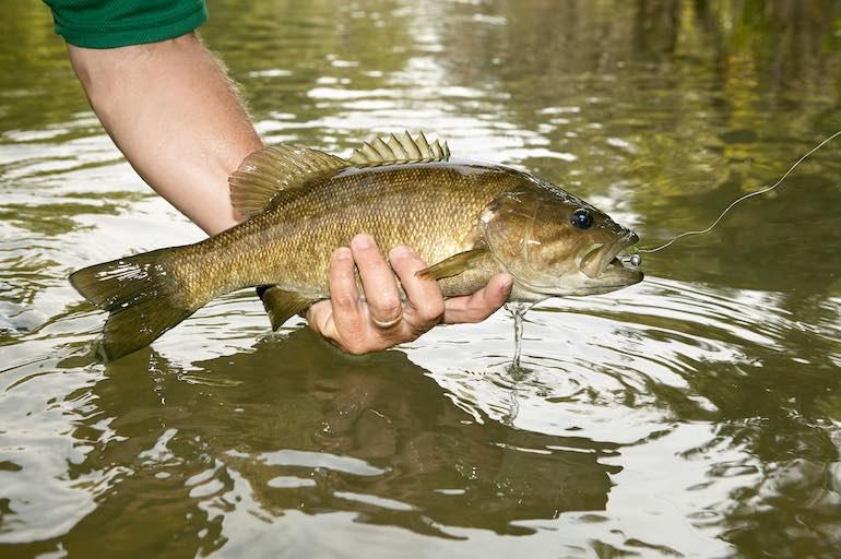 スモールマウスバス釣りはルアーや戦略の変化への対応力が決め手