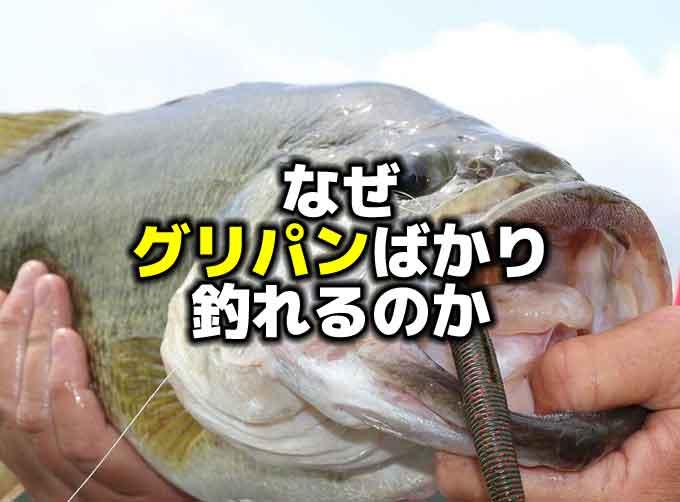 なぜ、グリパンばかりが釣れるのか【釣れるワームのカラー】