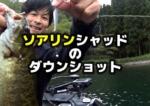 秋、10月の野尻湖:ソアリンシャッドのダウンショットでバス釣り!