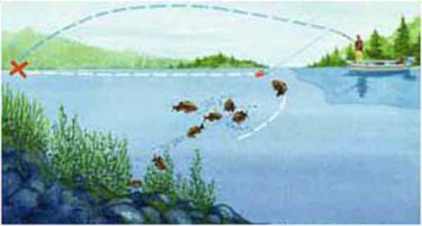 スモールマウスバスとウィード:変わる野尻湖の釣り!?