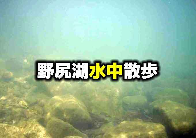野尻湖水中散歩:岸辺の生き物にはどんなものがいるの?【春の野尻湖水中映像】