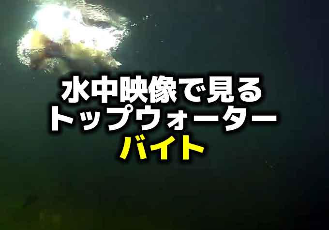 水中映像で見るトップウォータールアーへのバイト
