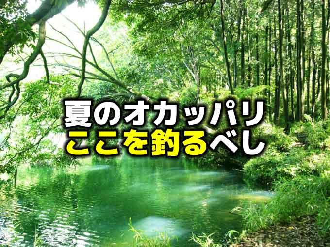 夏のオカッパリはこう釣ろう!:準備と対策