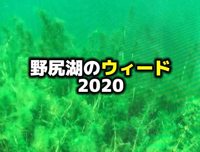 【2020年度版】野尻湖のウィードについて