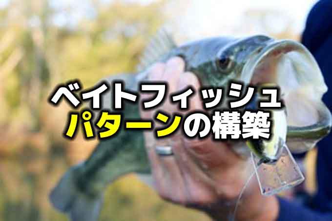 秋のリザーバーのベイトフィッシュパターンを構築しよう【秋のバス釣り重要課題】