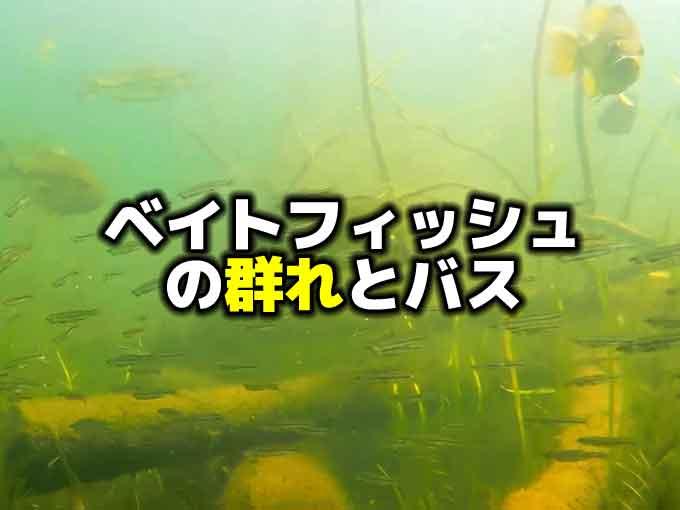 ベイトフィッシュの群れとバス釣り【小ネタ】