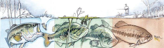 野池のバス釣り:水質別のルアー選び