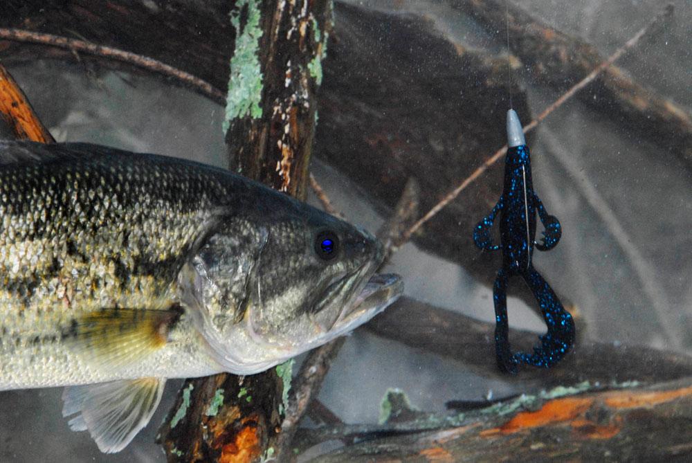 釣りの経験で学んだ瞬時のルアー選び【ケビンバンダム】