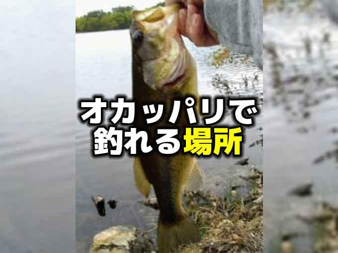 確認!!オカッパリで釣れる場所【バス釣り初心者向け・基礎基本】